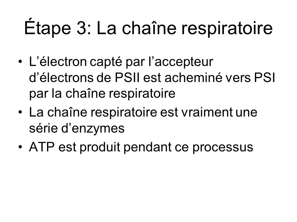 Étape 3: La chaîne respiratoire