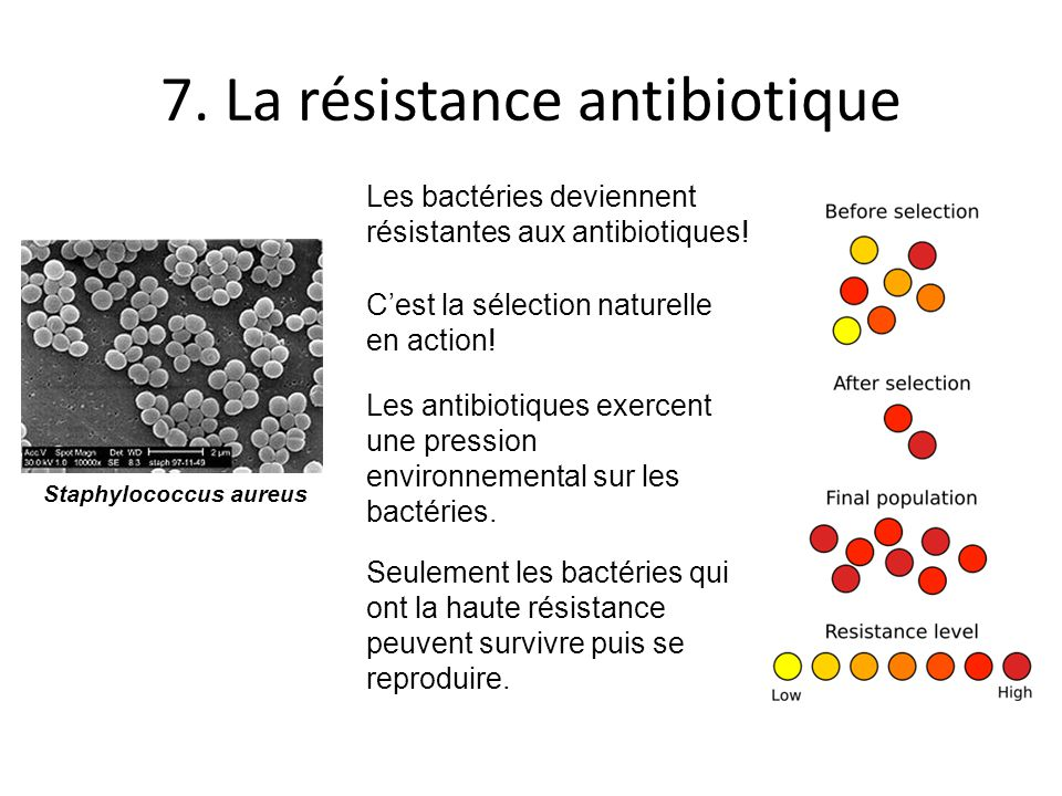 7. La résistance antibiotique
