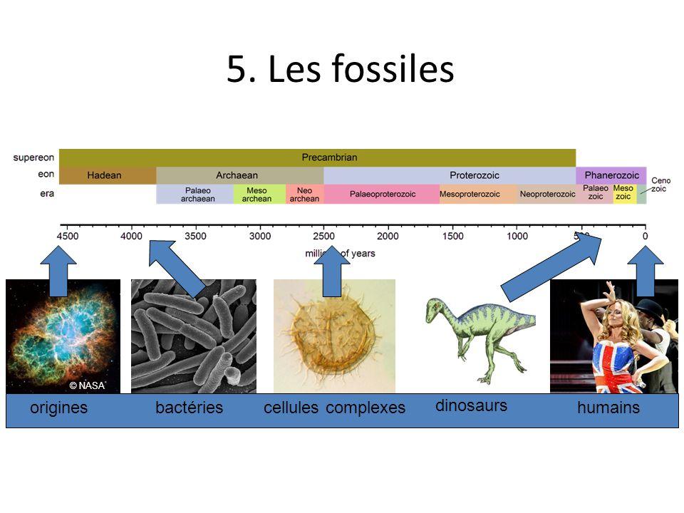 5. Les fossiles origines bactéries cellules complexes dinosaurs
