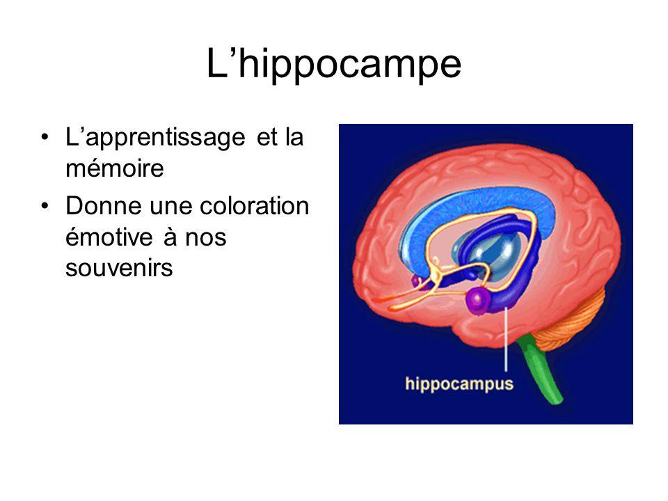 L'hippocampe L'apprentissage et la mémoire