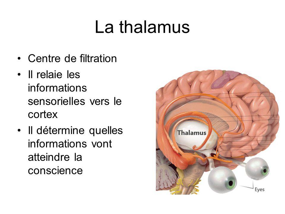 La thalamus Centre de filtration