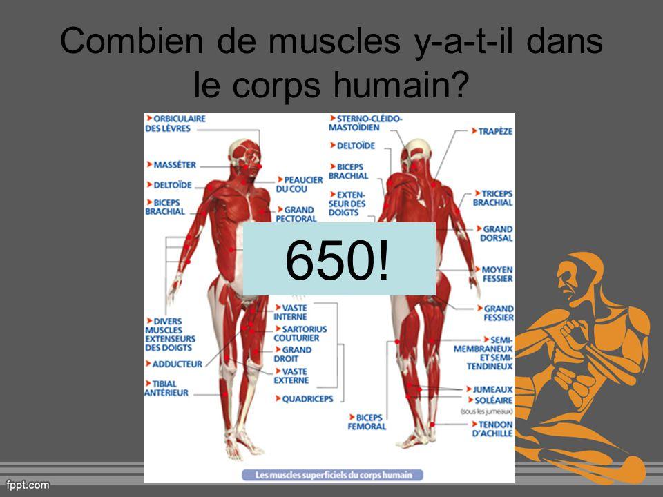 Combien de muscles y-a-t-il dans le corps humain