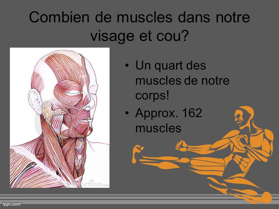 Combien de muscles dans notre visage et cou