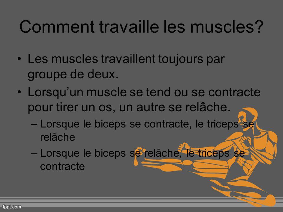 Comment travaille les muscles