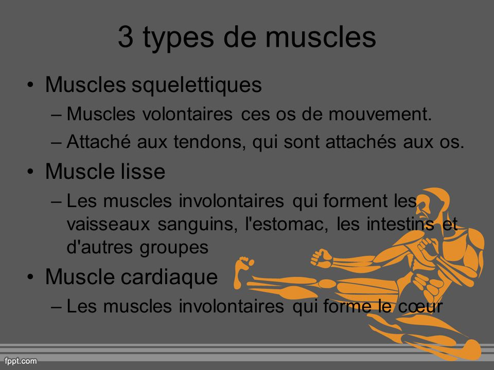 3 types de muscles Muscles squelettiques Muscle lisse Muscle cardiaque