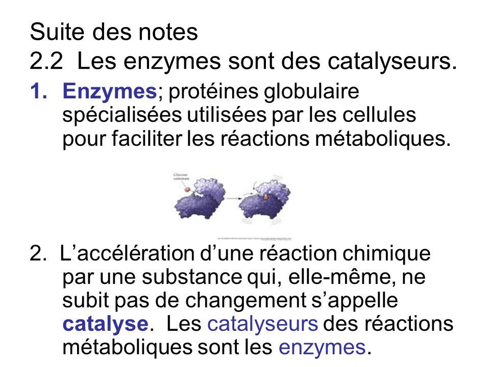 Suite des notes 2.2 Les enzymes sont des catalyseurs.