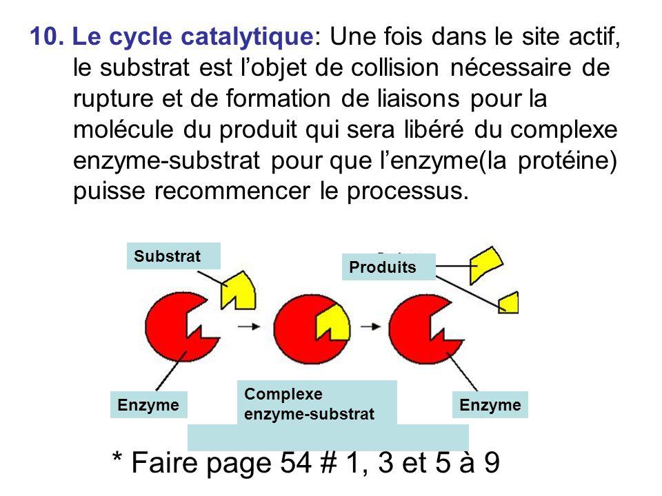 10. Le cycle catalytique: Une fois dans le site actif, le substrat est l'objet de collision nécessaire de rupture et de formation de liaisons pour la molécule du produit qui sera libéré du complexe enzyme-substrat pour que l'enzyme(la protéine) puisse recommencer le processus.