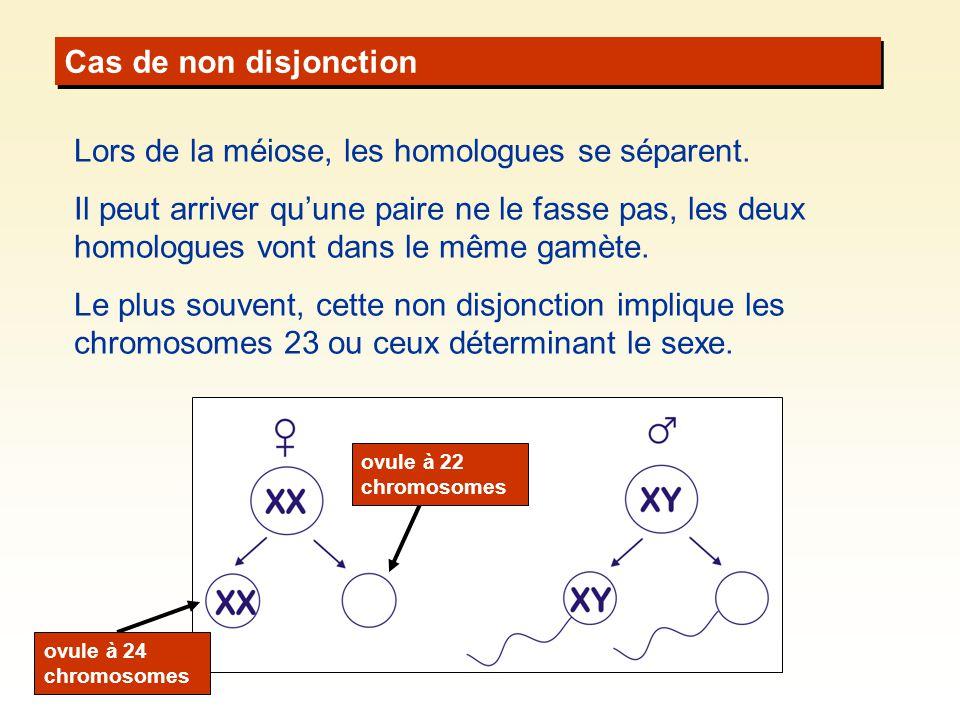 Lors de la méiose, les homologues se séparent.