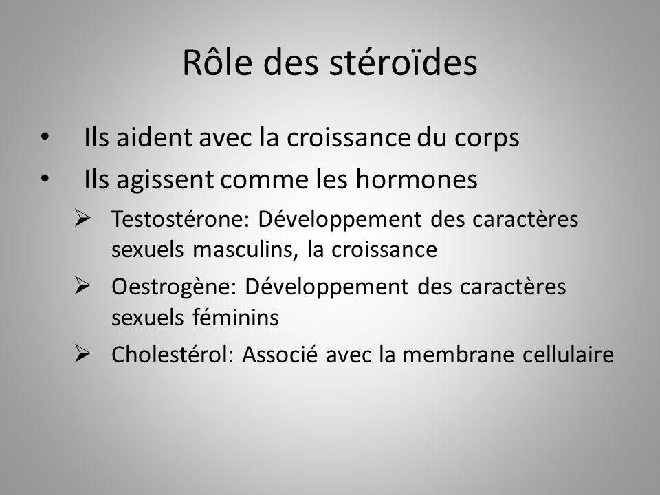 Rôle des stéroïdes Ils aident avec la croissance du corps