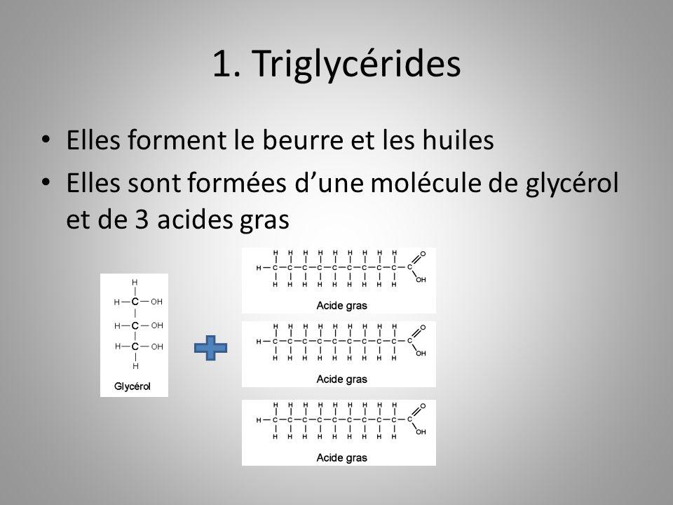 1. Triglycérides Elles forment le beurre et les huiles