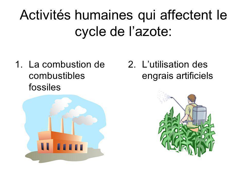 Activités humaines qui affectent le cycle de l'azote: