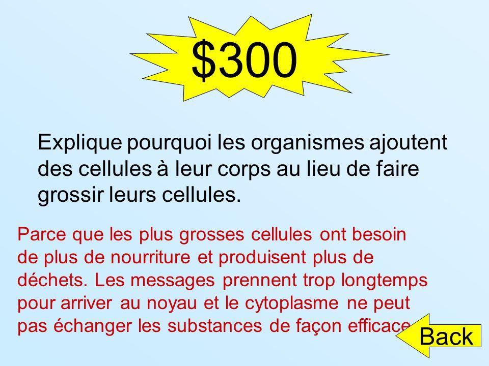 $300 Explique pourquoi les organismes ajoutent des cellules à leur corps au lieu de faire grossir leurs cellules.