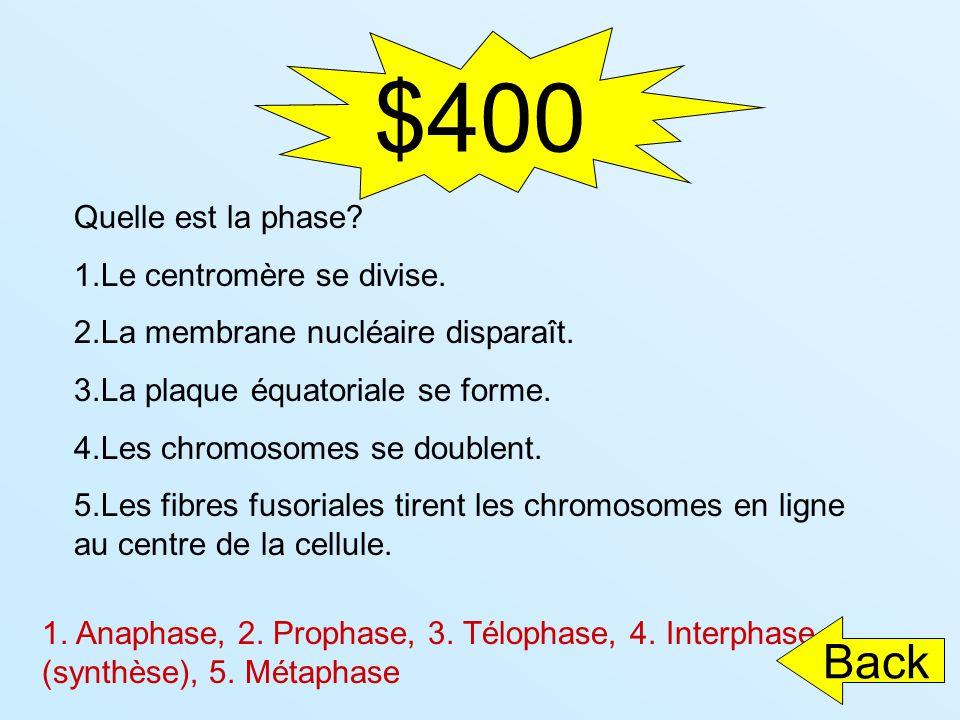 $400 Back Quelle est la phase Le centromère se divise.