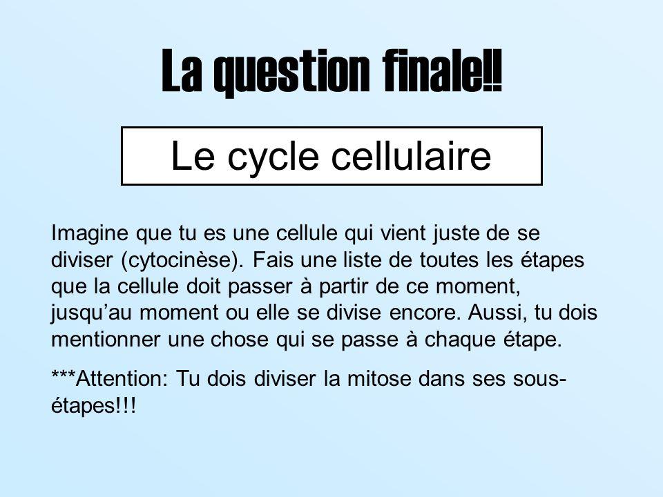 La question finale!! Le cycle cellulaire