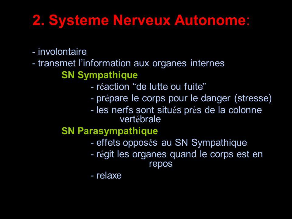 2. Systeme Nerveux Autonome: