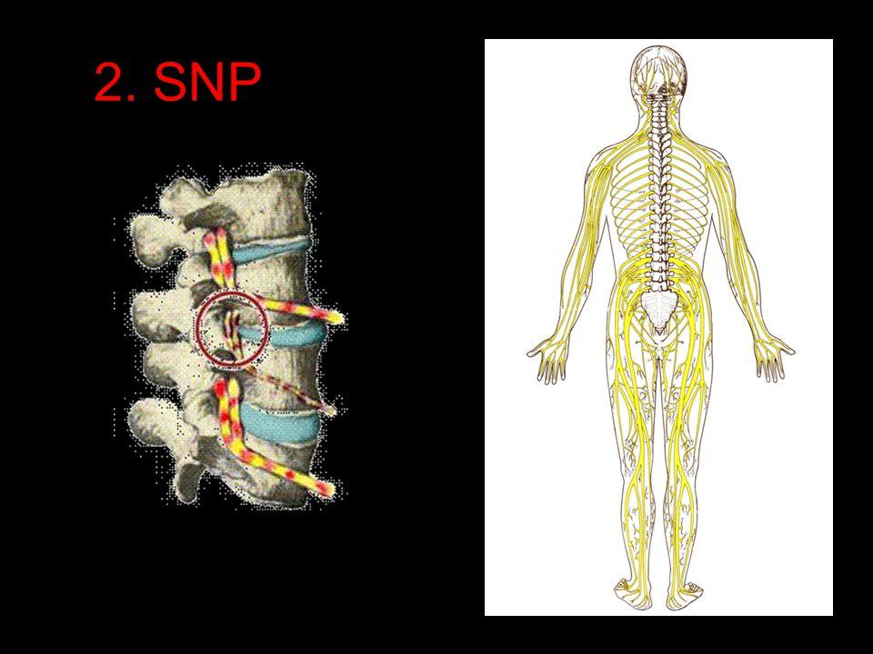 2. SNP