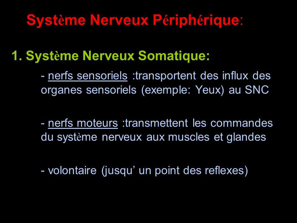 Système Nerveux Périphérique: