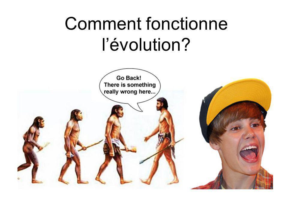 Comment fonctionne l'évolution