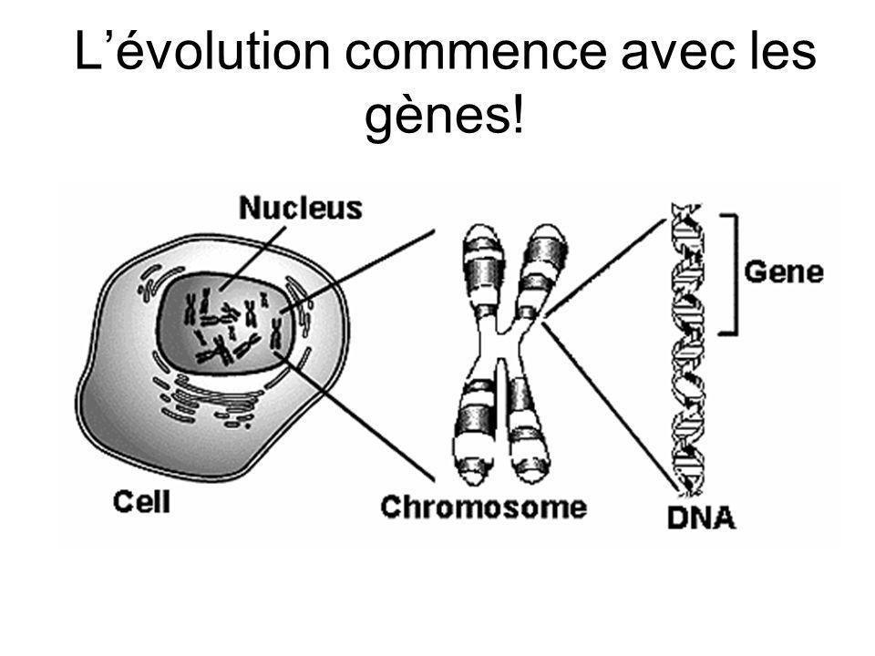 L'évolution commence avec les gènes!