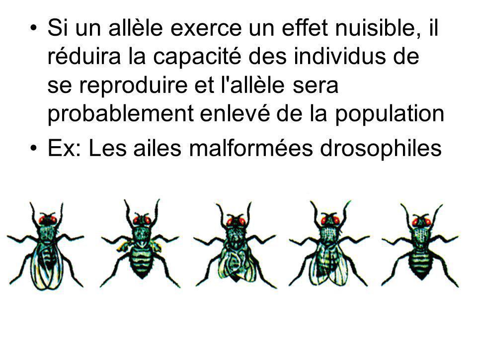 Ex: Les ailes malformées drosophiles