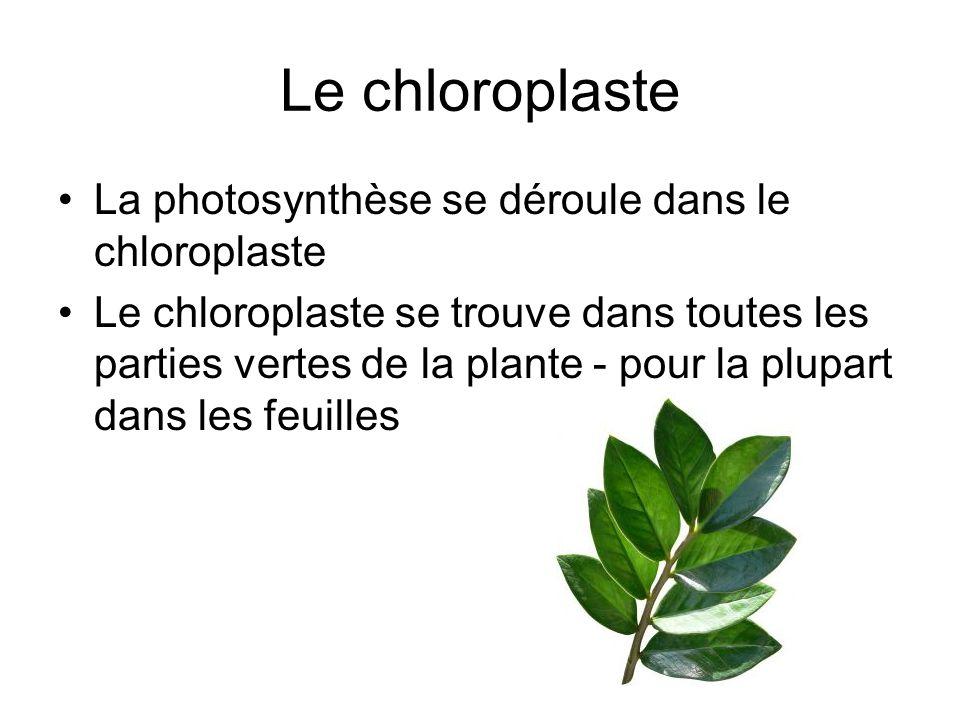 Le chloroplaste La photosynthèse se déroule dans le chloroplaste