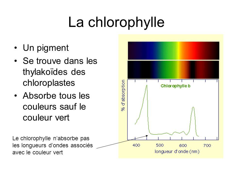La chlorophylle Un pigment