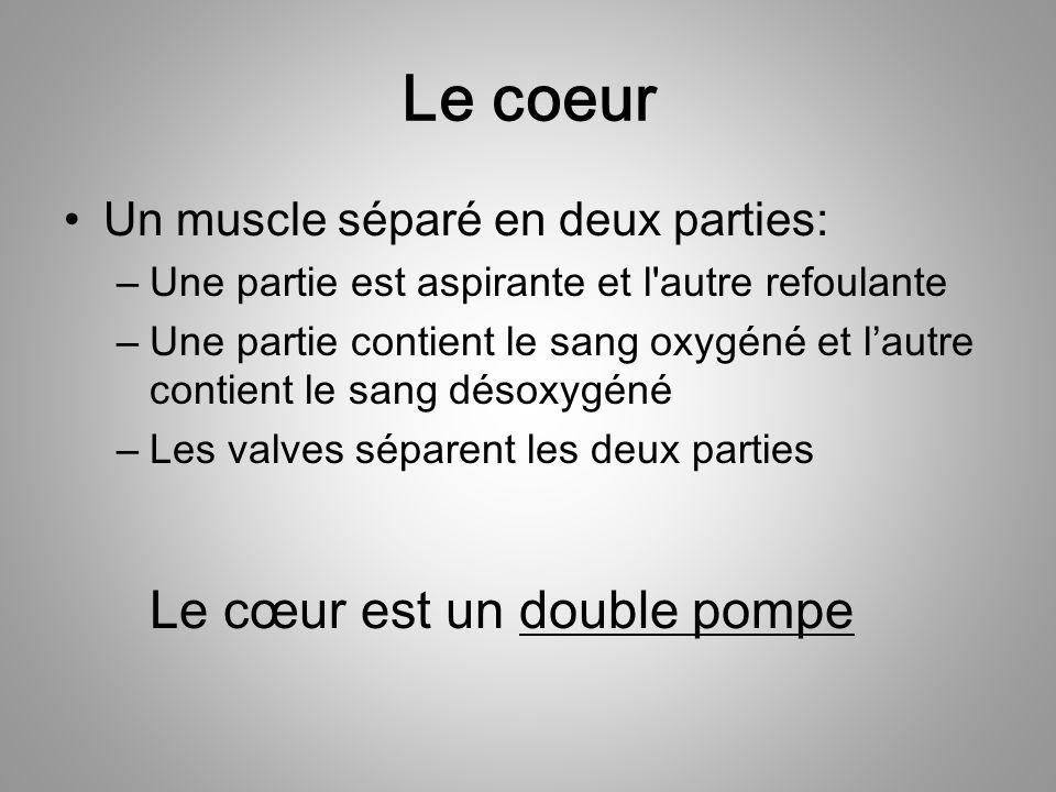 Le coeur Le cœur est un double pompe Un muscle séparé en deux parties: