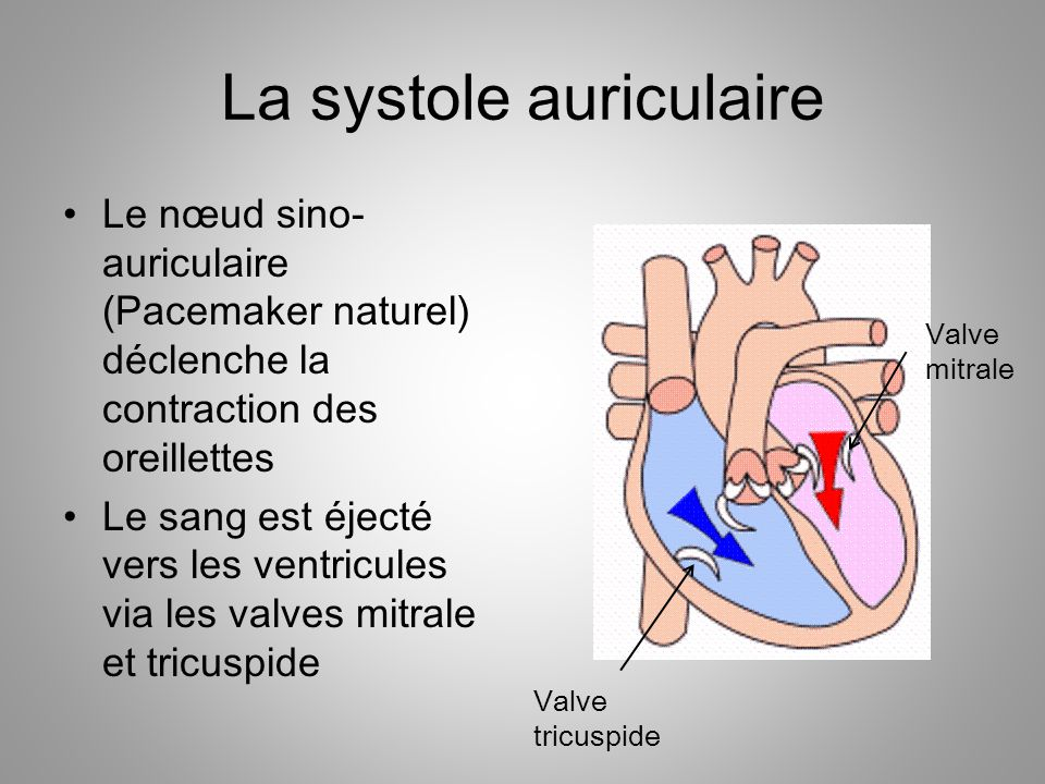 La systole auriculaire
