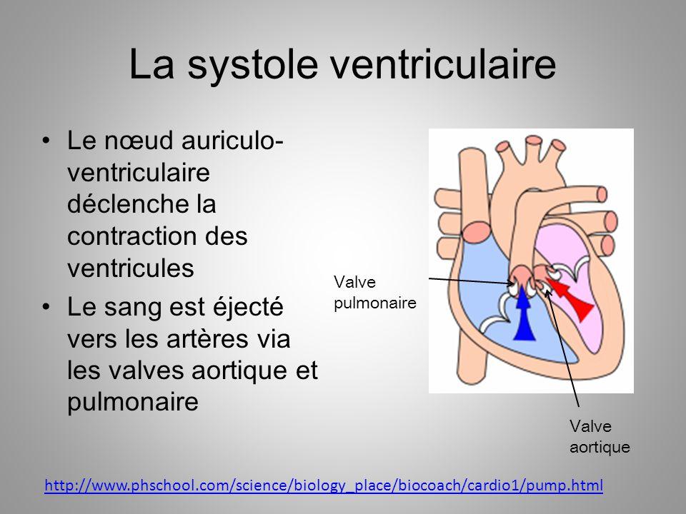 La systole ventriculaire