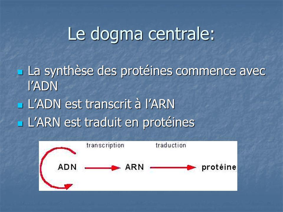 Le dogma centrale: La synthèse des protéines commence avec l'ADN