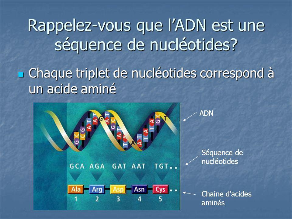 Rappelez-vous que l'ADN est une séquence de nucléotides