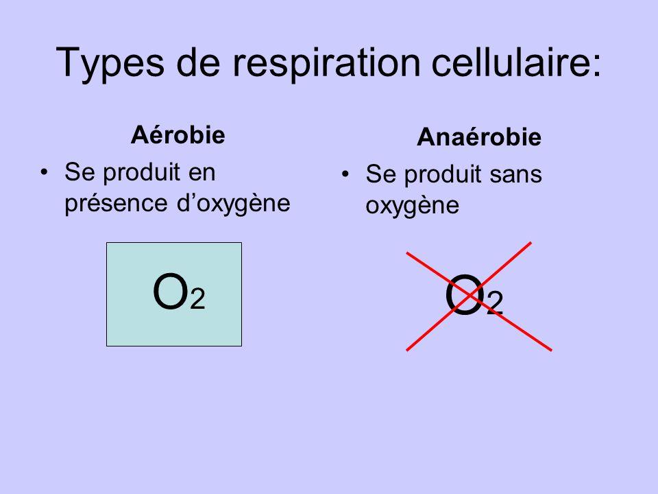 Types de respiration cellulaire: