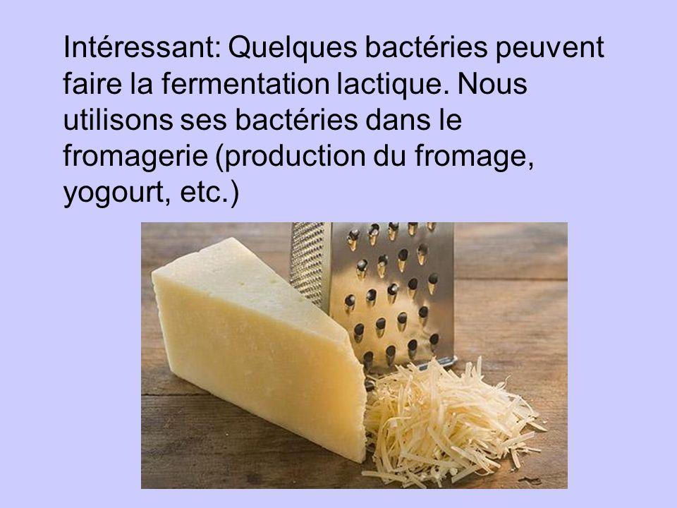 Intéressant: Quelques bactéries peuvent faire la fermentation lactique