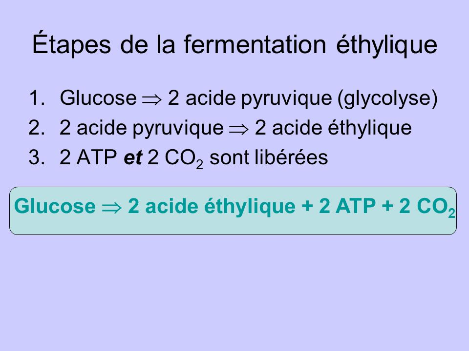 Étapes de la fermentation éthylique