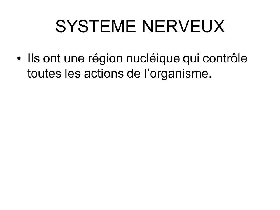 SYSTEME NERVEUX Ils ont une région nucléique qui contrôle toutes les actions de l'organisme.
