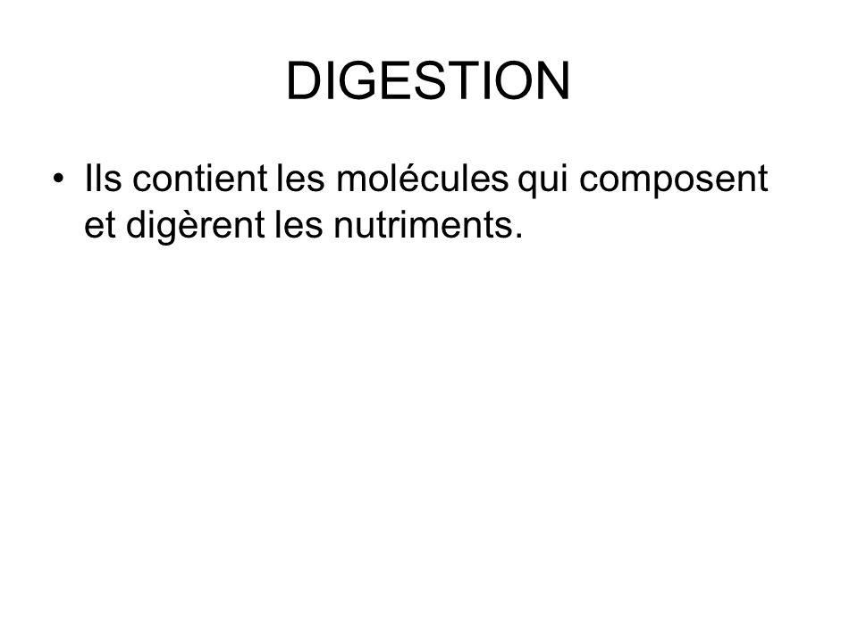 DIGESTION Ils contient les molécules qui composent et digèrent les nutriments.