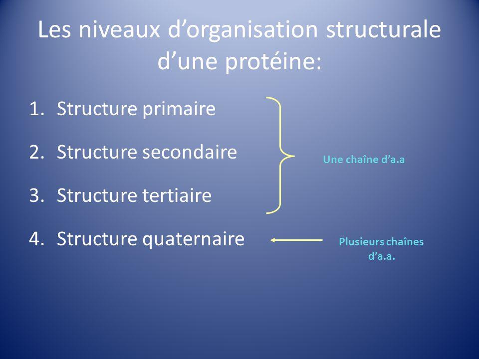 Les niveaux d'organisation structurale d'une protéine: