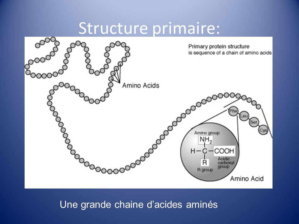 Une grande chaine d'acides aminés