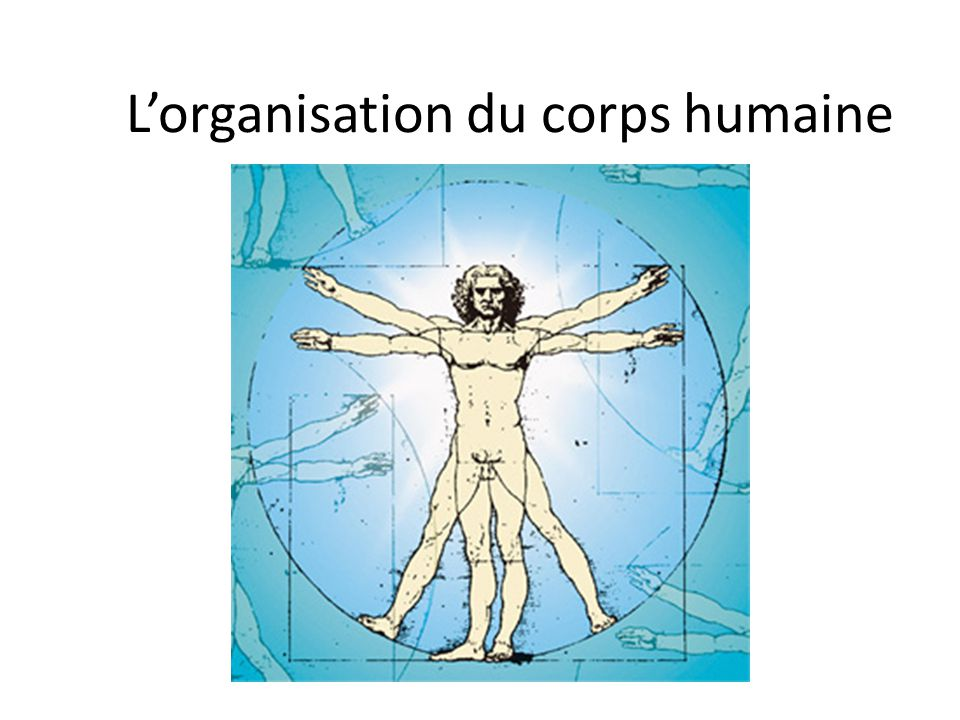 L'organisation du corps humaine