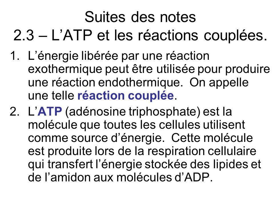 Suites des notes 2.3 – L'ATP et les réactions couplées.