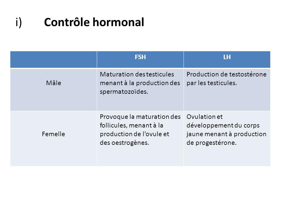 i) Contrôle hormonal FSH LH Mâle