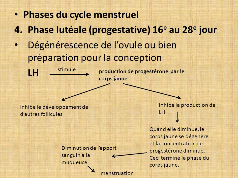 Phases du cycle menstruel