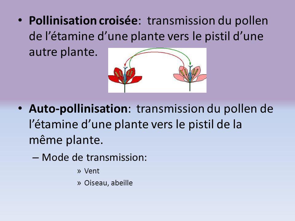 Pollinisation croisée: transmission du pollen de l'étamine d'une plante vers le pistil d'une autre plante.