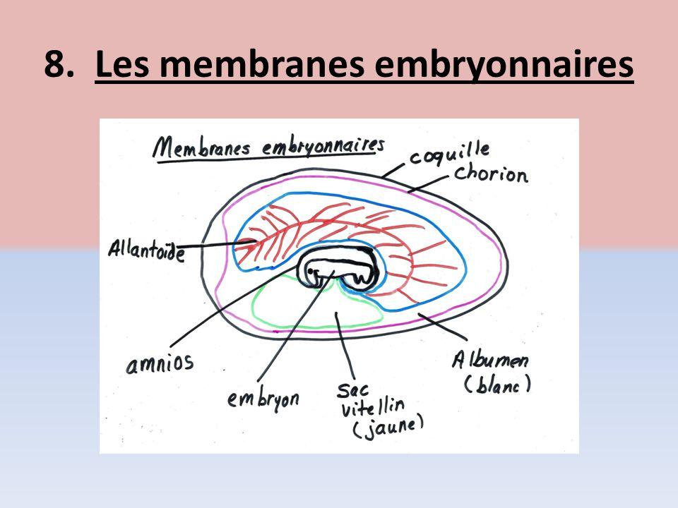 8. Les membranes embryonnaires