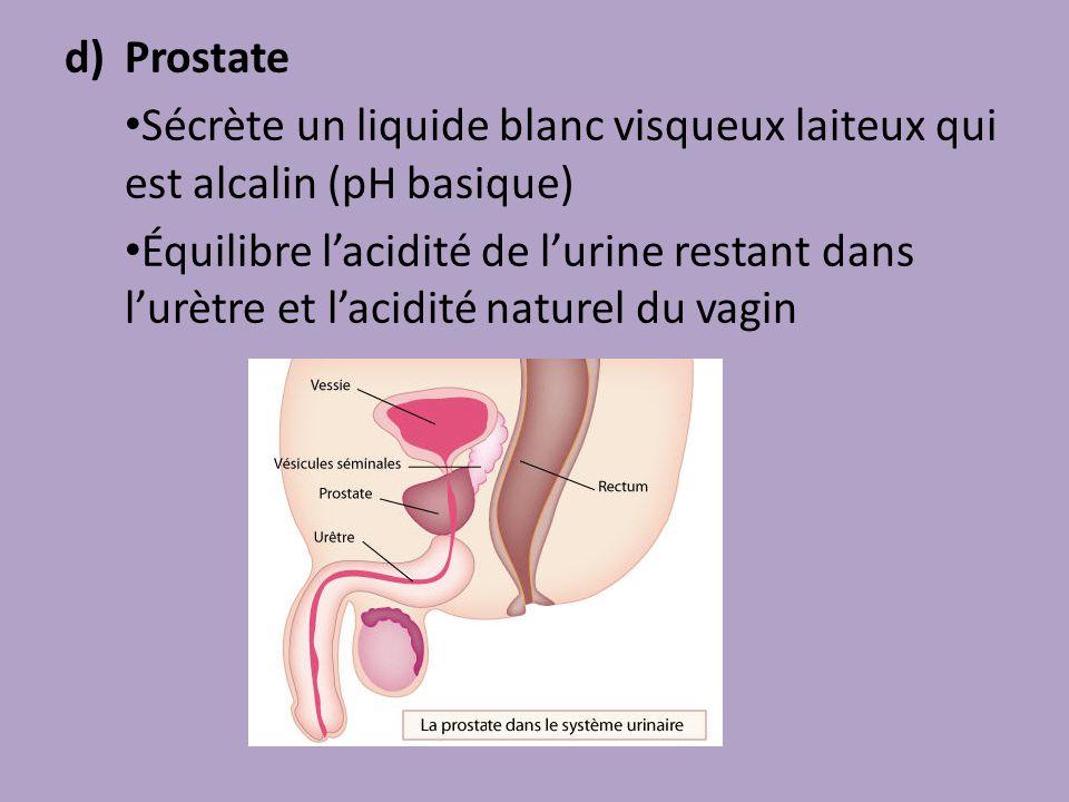 Prostate Sécrète un liquide blanc visqueux laiteux qui est alcalin (pH basique)
