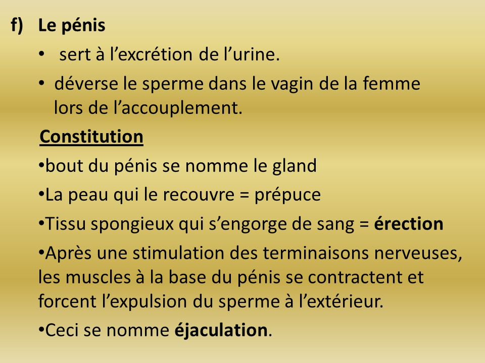 Le pénis sert à l'excrétion de l'urine. déverse le sperme dans le vagin de la femme lors de l'accouplement.
