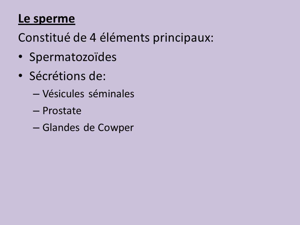 Constitué de 4 éléments principaux: Spermatozoïdes Sécrétions de: