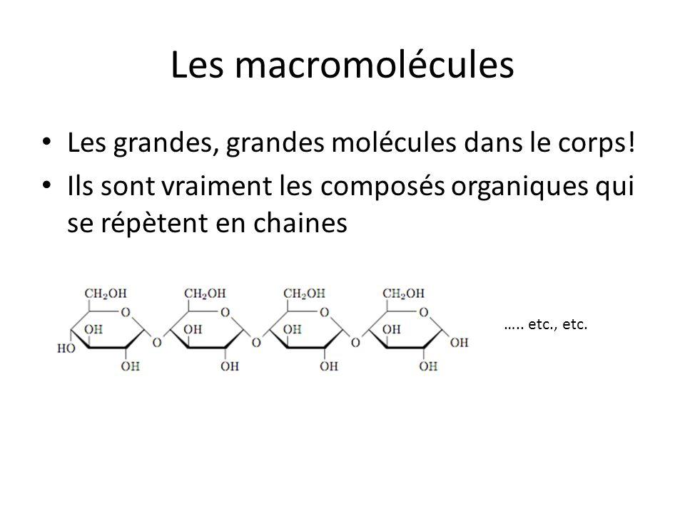 Les macromolécules Les grandes, grandes molécules dans le corps!
