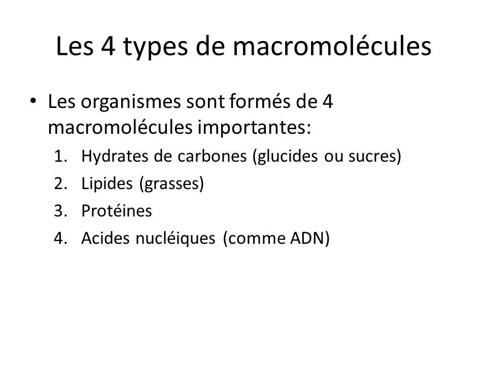 Les 4 types de macromolécules