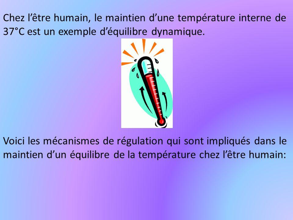 Chez l'être humain, le maintien d'une température interne de 37°C est un exemple d'équilibre dynamique.